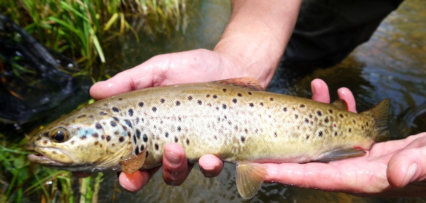 Continental Trout Spain 5